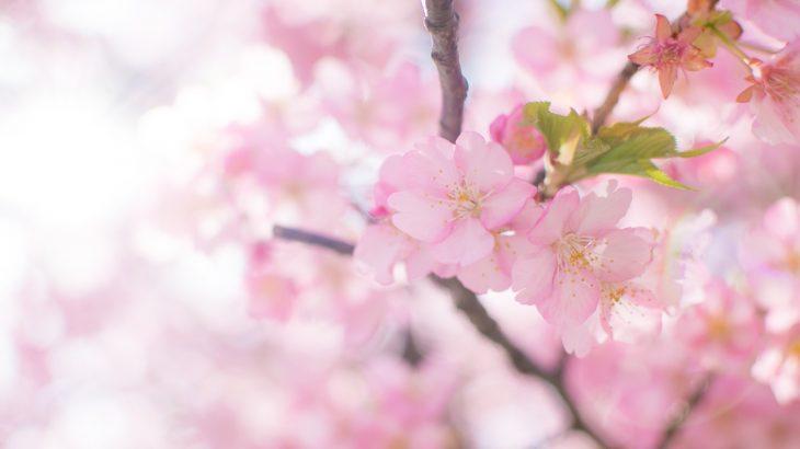 春にしておくと良いケア。